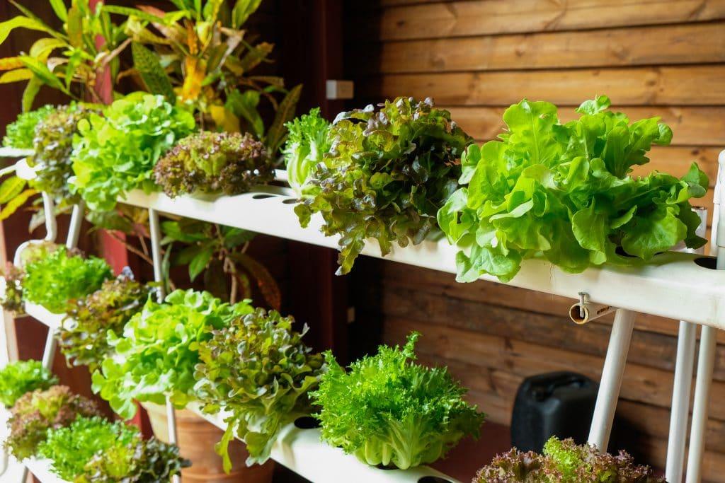 Odlande stadsbasarer ska minska sårbarhet för samhället gällande matproduktion