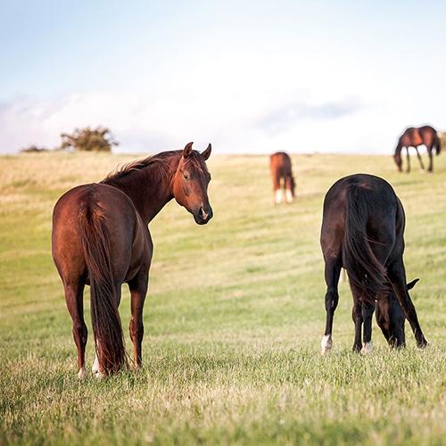 Samverkan för att utveckla rådgivning för hästföretagare