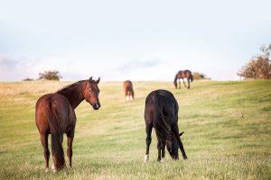 Nätverksträff för hästföretagare